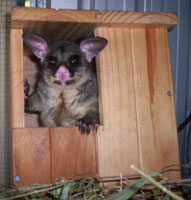 ENVIRONMENT_Possum_Nesting_Box