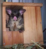 ENVIRONMENT_Possum_Nesting_Box