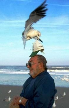 seagull_hat