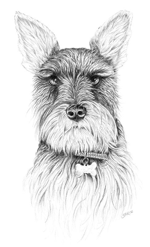 dog-drawing