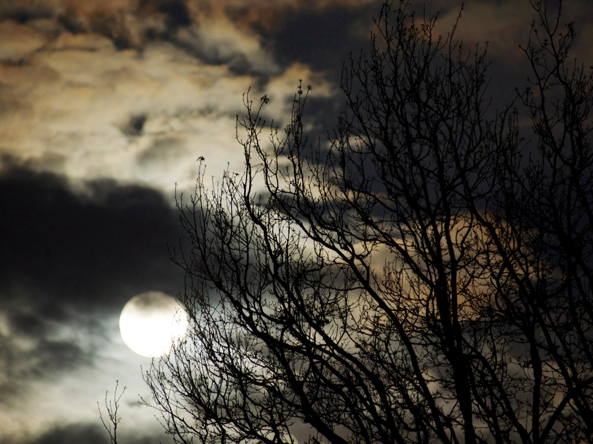 Early moon_2